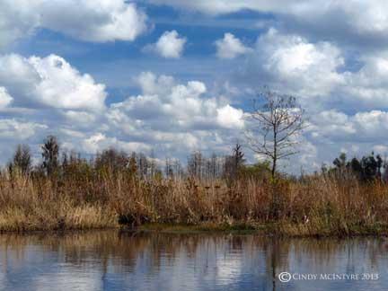 Cedar Hammock in Mizell Prairie