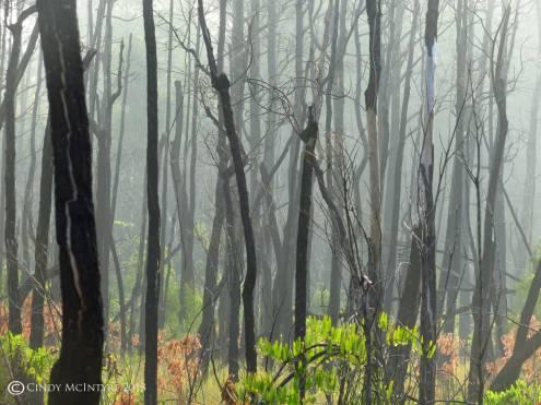 Skeleton forest