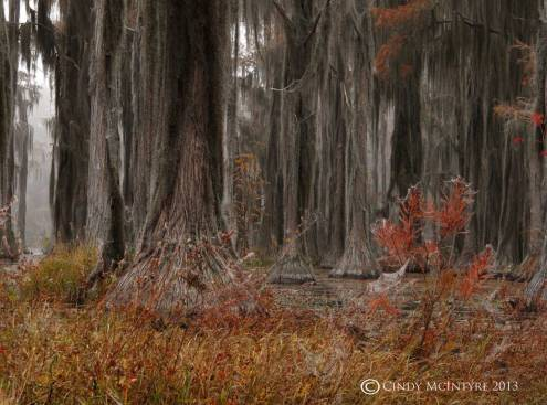 Cypress-in-fog,-Banks-Lake-NWR,-GA-(1)-copy