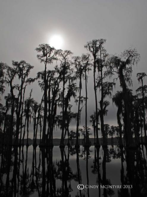 Cypress-in-fog,-Banks-Lake-NWR,-GA-(13)-copy