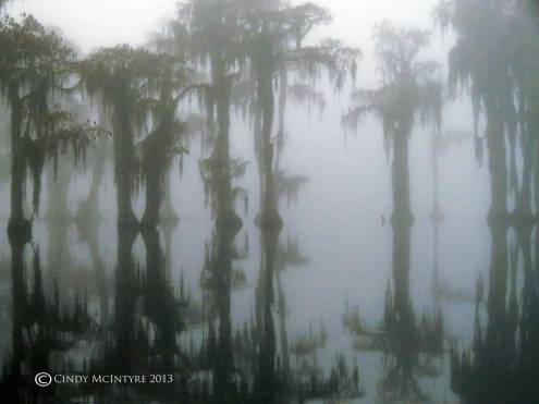 Cypress-in-fog,-Banks-Lake-NWR,-GA-(17)-copy