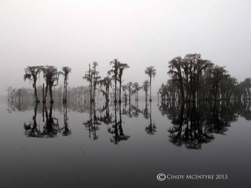 Cypress-in-fog,-Banks-Lake-NWR,-GA-(2)-copy
