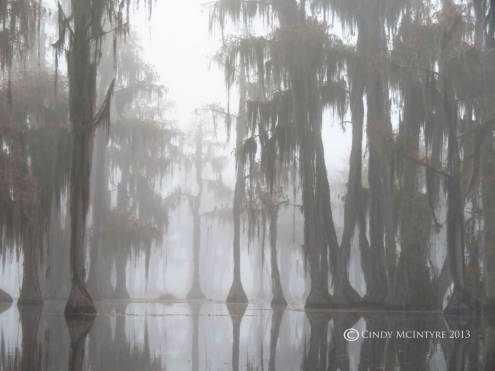 Cypress-in-fog,-Banks-Lake-NWR,-GA-(41)-copy