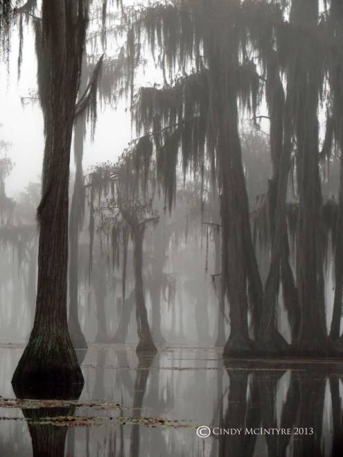 Cypress-in-fog,-Banks-Lake-NWR,-GA-(44)-copy
