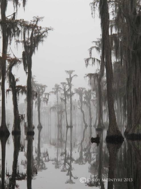 Cypress-in-fog,-Banks-Lake-NWR,-GA-(5)-copy