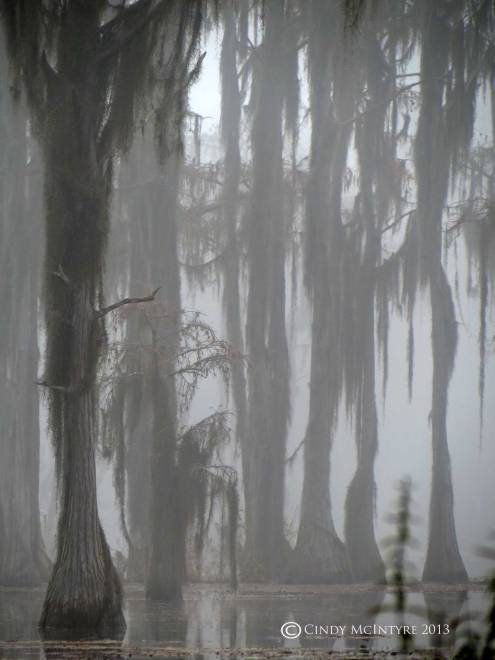Cypress-in-fog,-Banks-Lake-NWR,-GA-(57)-copy