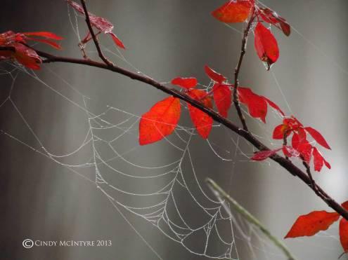 Poison-Ivy-and-spider-web,-Banks-Lake-NWR-GA-(1)-copy