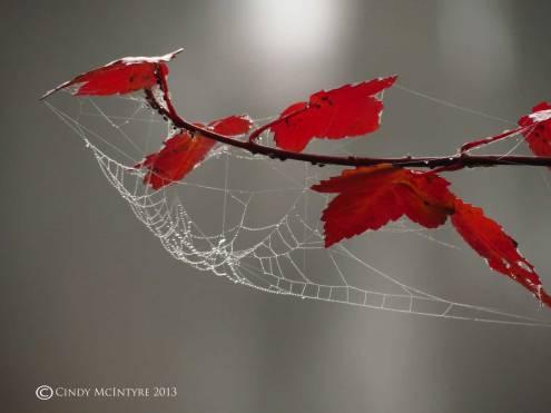 Poison-Ivy-and-spider-web,-Banks-Lake-NWR-GA-(9)-copy
