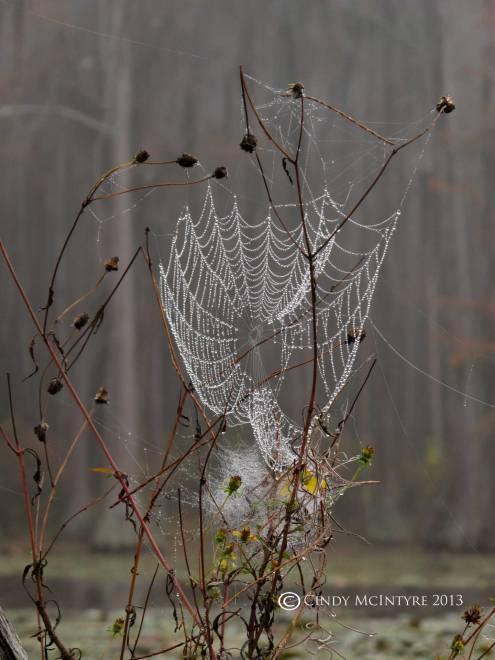 Spider-web,-Banks-Lake-NWR,-GA-(1)-copy