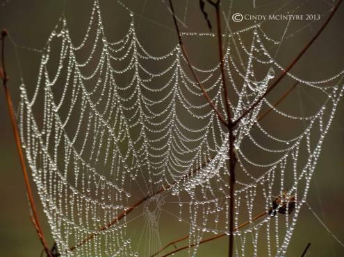 Spider-web,-Banks-Lake-NWR,-GA-(11)-copy