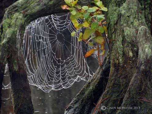 Spider-Web,-Banks-Lake-NWR,-GA-(14)-copy