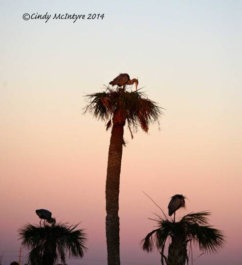 Three nests at sunset
