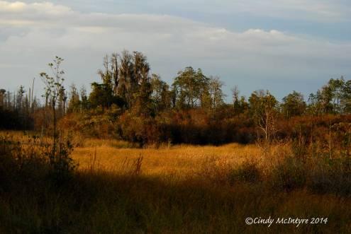 A meadow along the boardwalk in the sun's last rays