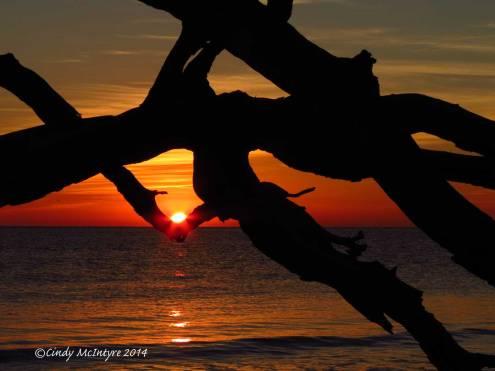 Sunrise,-Jekyll-Island-boneyard,-GA-(18)-copy-3