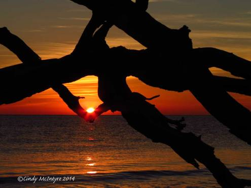 Sunrise,-Jekyll-Island-boneyard,-GA-(18)-copy-3