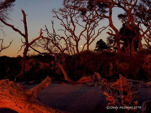 Sunrise,-Jekyll-Island-boneyard,-GA-(3)-copy-2