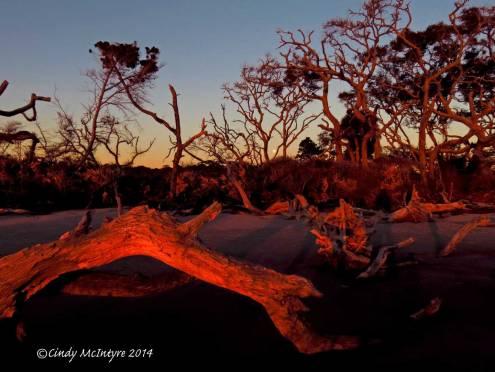 Sunrise,-Jekyll-Island-boneyard,-GA-(4)-copy-2