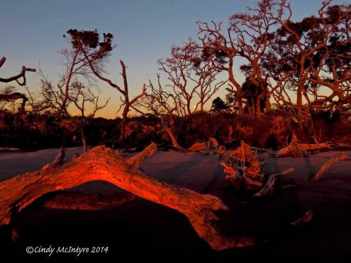 Sunrise,-Jekyll-Island-boneyard,-GA-(4)-copy-2