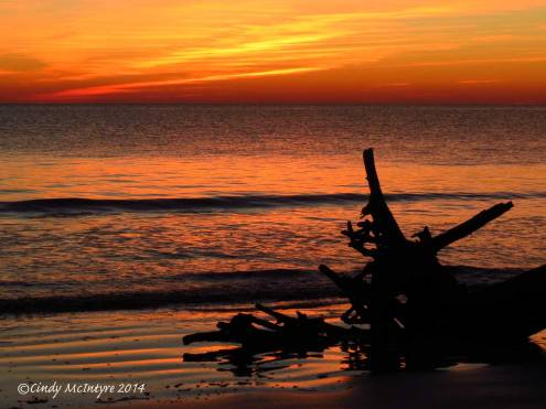 Sunrise,-Jekyll-Island-boneyard,-GA-(5)-copy-2