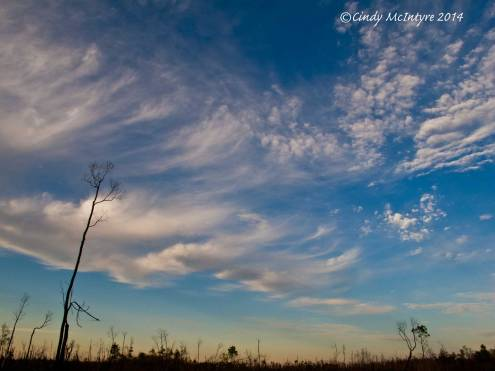 Nature's brush strokes