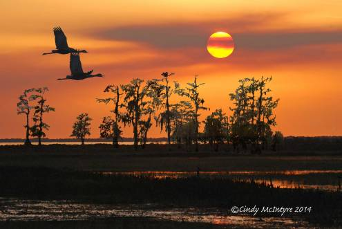 Montage of 3 photographs - Sandhill cranes and sunset at Lake Kissimmee, cypress trees at Lake Martin, Louisiana