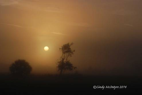 Fog,-Joe-Overstreet-Rd,-Lk-Kissimmee-FL-(14)-copy