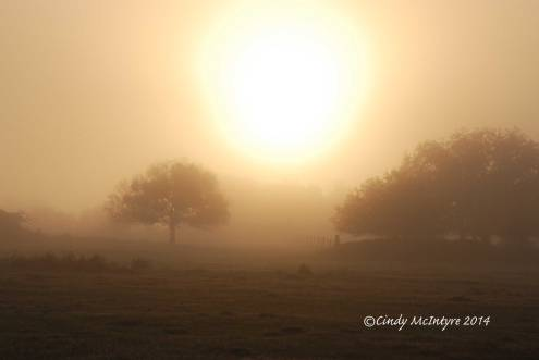 Fog,-Joe-Overstreet-Rd,-Lk-Kissimmee-FL-(17)-copy