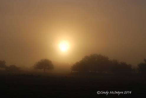 Fog,-Joe-Overstreet-Rd,-Lk-Kissimmee-FL-(20)-copy