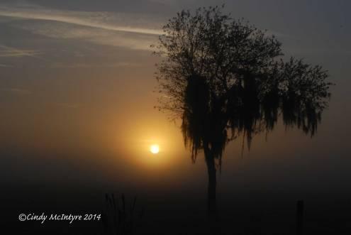 Fog,-Joe-Overstreet-Rd,-Lk-Kissimmee-FL-(3)