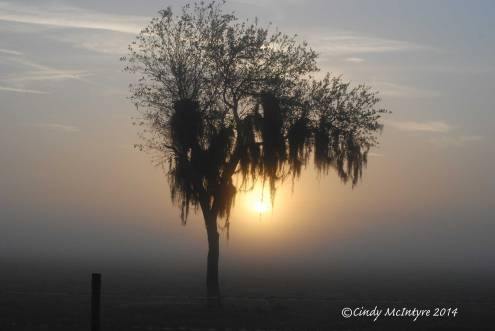 Fog,-Joe-Overstreet-Rd,-Lk-Kissimmee-FL-(5)-copy