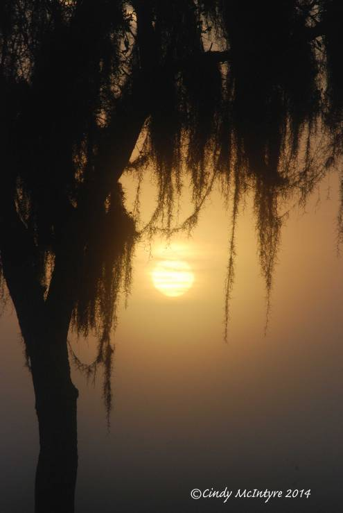 Fog,-Joe-Overstreet-Rd,-Lk-Kissimmee-FL-(8)-copy