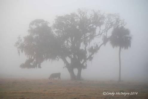 Fog,-Joe-Overstreet-Rd