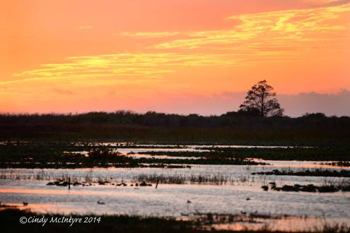 Sunset-at-Joe-Overstreet-Landing,-Lk-Kissimmee-FL-(6)-copy-3