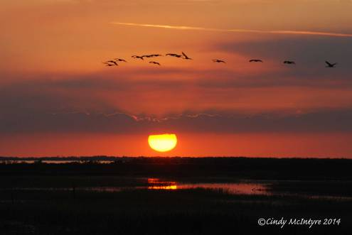 Sunset,-Joe-Overstreet-Landing,-Lk-Kissimmee-FL-(8)-copy-2