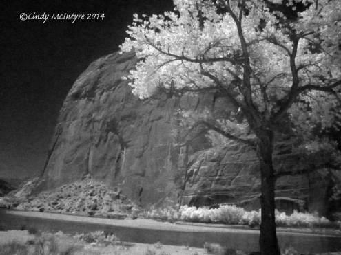 Cottonwoods and Steamboat Rock