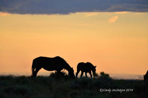 Pilot-Butte-horses,-Green-River-WY-(15)