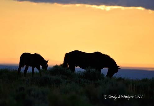Pilot-Butte-horses,-Green-River-WY-(17)-copy-2