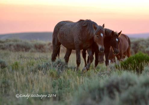 Pilot-Butte-horses,-Green-River-WY-(19)-copy-2