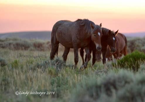 Pilot-Butte-horses,-Green-River-WY-(19)-copy-2