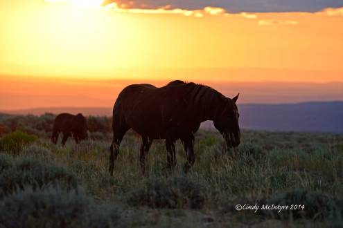 Pilot-Butte-horses,-Green-River-WY-(21)-copy-2