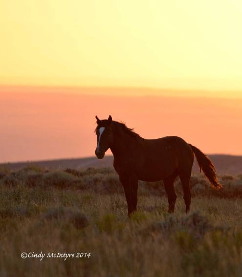 Pilot-Butte-horses,-Green-River-WY-(23)-copy-2