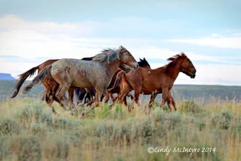Pilot-Butte-horses,-Green-River-WY-(24)-copy-2