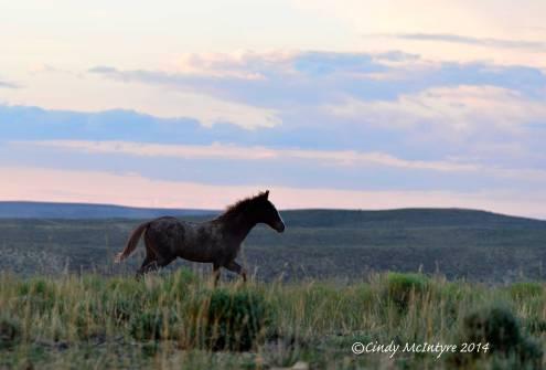 Pilot-Butte-horses,-Green-River-WY-(28)-copy