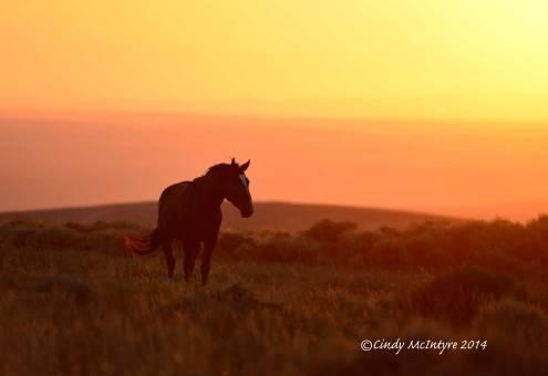 Pilot-Butte-horses,-Green-River-WY-(32)-copy-2