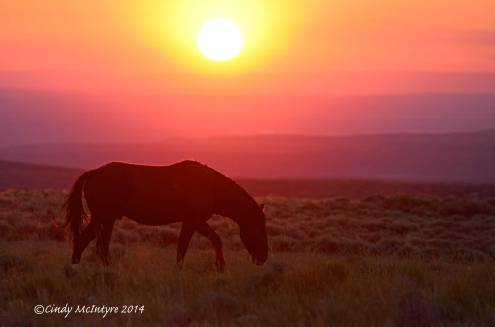Pilot-Butte-horses,-Green-River-WY-(38)-copy-2