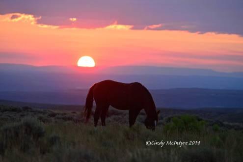 Pilot-Butte-horses,-Green-River-WY-(44)-copy-2