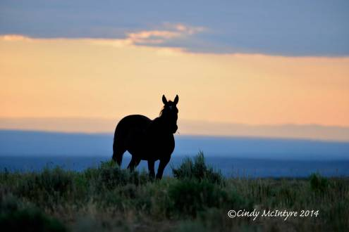 Pilot-Butte-horses,-Green-River-WY-(6)-copy-2