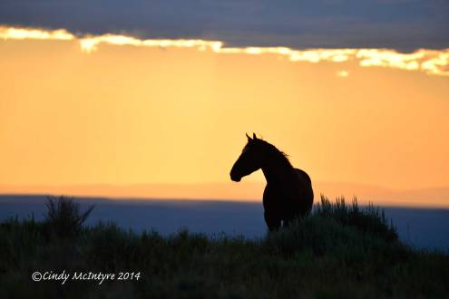 Pilot-Butte-horses,-Green-River-WY-(7)-copy-2