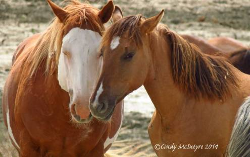 Sand-Wash-Basin-Wild-Horses,-CO-(21)-copy