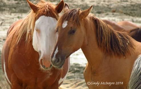 Sand-Wash-Basin-Wild-Horses,-CO-(21)-copy